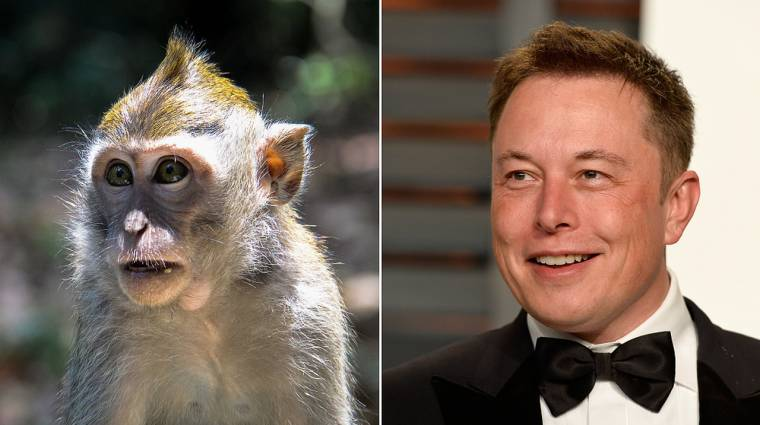 Elon Musk: The Brain Torn Monkey is happy and plays video games