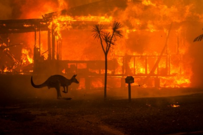 Forest fires in Australia have destroyed a fifth of forests