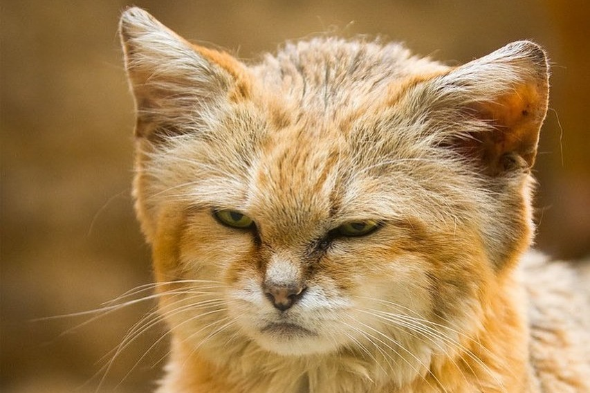 Grumpy and funny - animals that show the most sincere human emotions