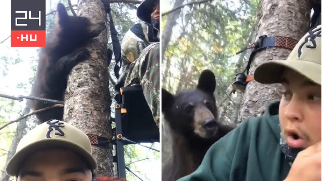 Hunters sat in shock as the bear climbed into the hunting trench