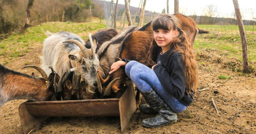 """Family farm in Németbánya: """"The state of mind changes here"""""""