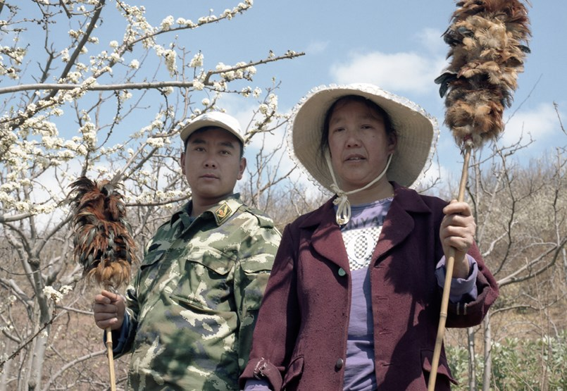 Where Bees Have Disappeared Forever: Hand Pollination in China