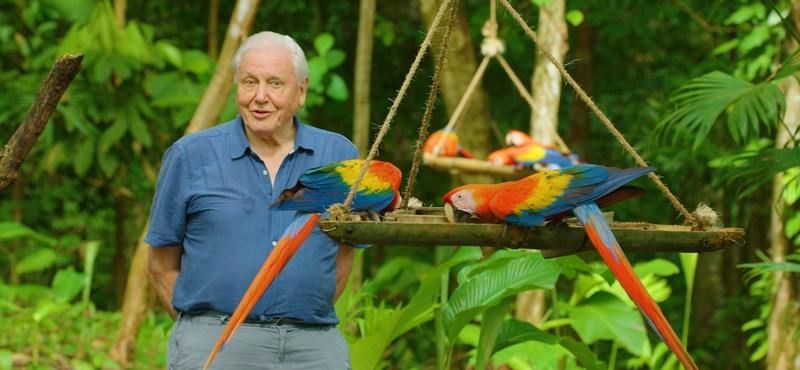 By the age of 95, David Attenborough sees the world hotter than anyone else
