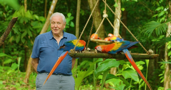 Cult: At the age of 95, David Attenborough sees the world hotter than anyone else