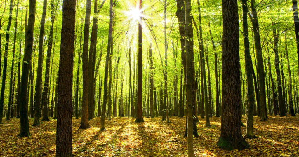 Half of German forests die
