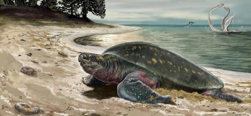 Two-thirds of frozen Texas turtles have been destroyed