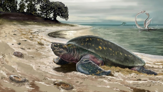 Zhvg: Two-thirds of frozen Texas turtles have been destroyed