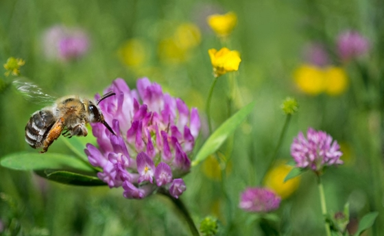 Zhvg: Why is there an urgent need for urban beehives?