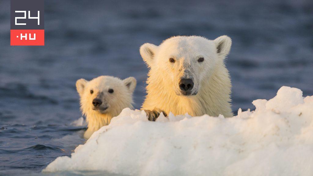 The last refuge of polar bears is beginning to melt