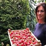 Judith Varga opens the strawberry season with a ministerial joke