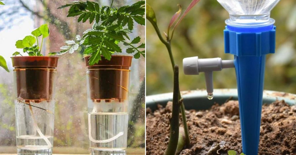 Don't dry out the flower while you're on vacation: 3 ingenious self-watering ideas to keep your plants alive