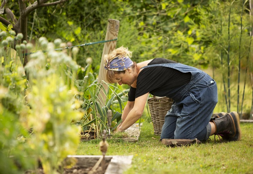 How can you combat garden pests if you avoid chemicals?
