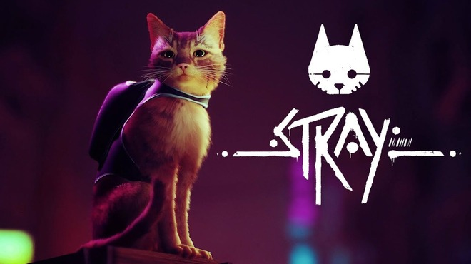 The new cat is Cyberpunk, the stray