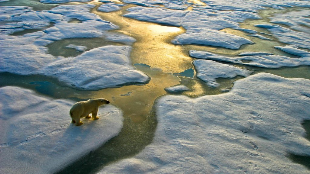 A puzzle in the cube: they don't understand, but the last refuge of polar bears is also melting hard