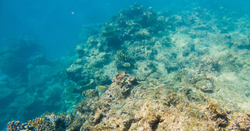 Bibliography – Science and Technology – The Great Barrier Reef may be an endangered World Heritage Site