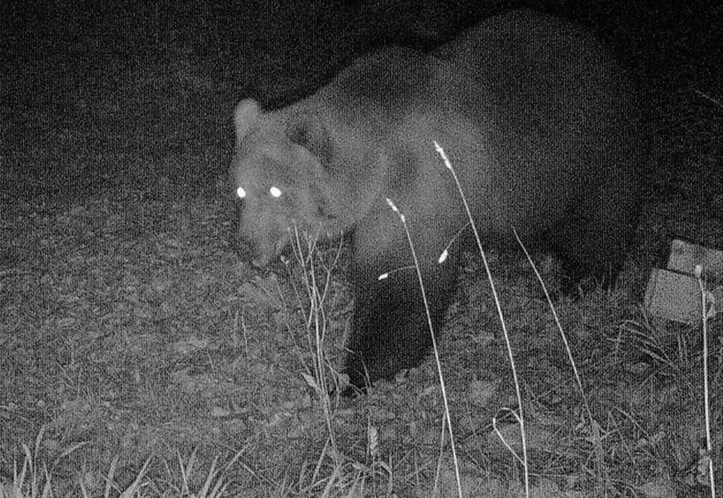The bear is not a toy, but we can defend against it in a simpler way than we think