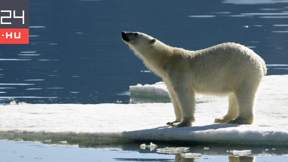 Filmmakers attacked a polar bear in Greenland
