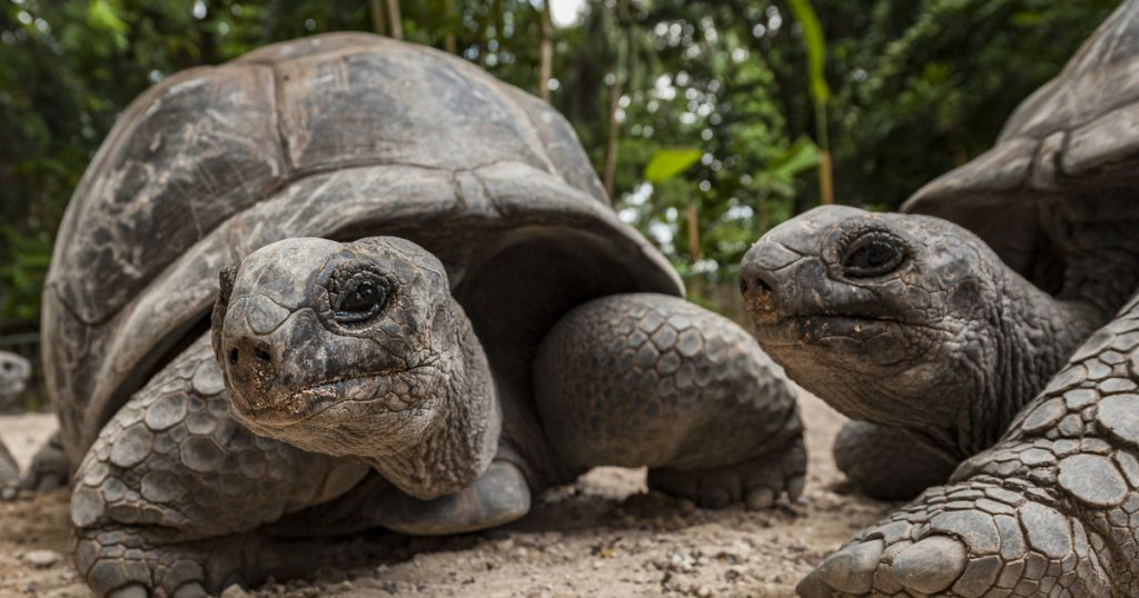 Index - science - herbivorous turtles ate a bird