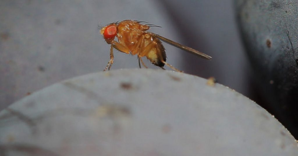 Catalog – Tech-Science – Dangerous Asian pests spread in Hungary