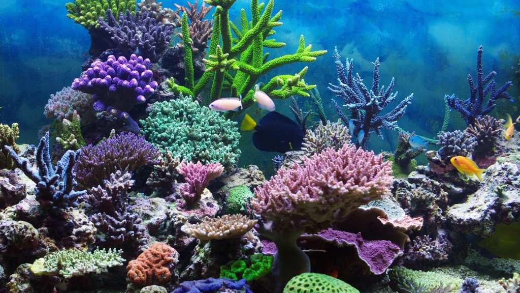 Save the ocean's coral reefs with science 3D printers