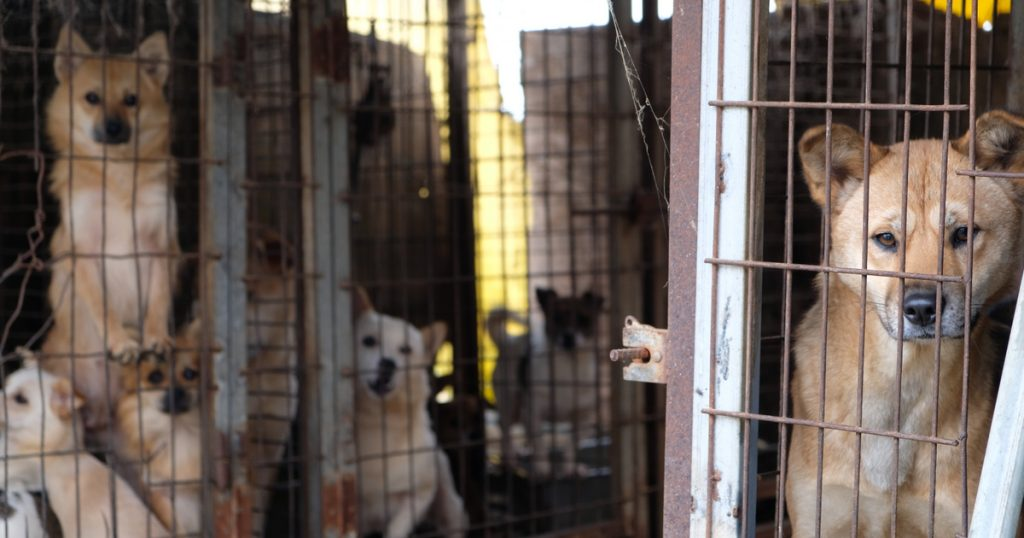 Index – Outside – They eat a million dogs a year, and now they're going to ban their consumption