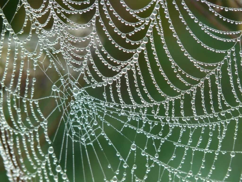 This is why we see more spiders in our house as autumn approaches