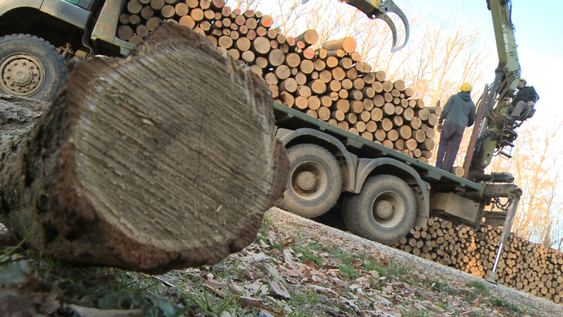 Firewood Social – Economy – News is also successful this year